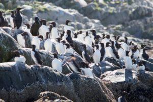 A day trip to the bird island Hornøya – Norway